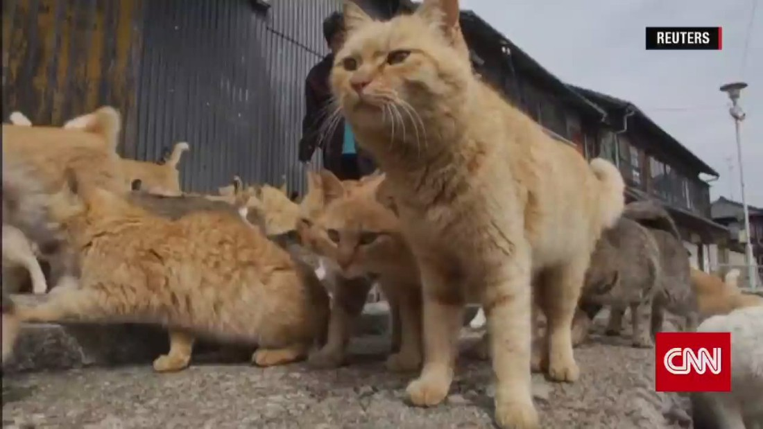 welcome to japans cat island cnn video