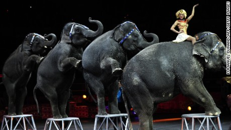 Circus elephants in New York seven years ago.