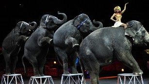 Ringling Bros. elephants perform last show