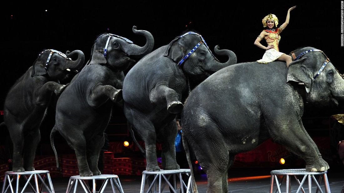 Elephants perform in 2010 to celebrate the 200th birthday of Phineas Taylor Barnum, a founder of the circus.