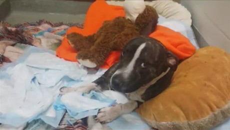dnt fl dog survives abuse attack_00004728