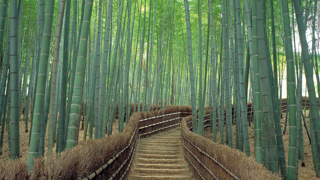 """Considered one of the world's most beautiful forests, it's not just tranquil visually but also aurally. <br />The bamboo grove is beloved for its distinct rustling sound, so much that Japan's Ministry of Environment included the <a href=""""http://edition.cnn.com/2014/08/11/travel/sagano-bamboo-forest/"""">Sagano Bamboo Forest</a> on its list of """"100 Soundscapes of Japan."""" <br />The towering green stalks creak eerily while leaves rustle in the sway of the wind.<em><br />Sagano Bamboo Forest, Arashiyama, Kyoto, Japan</em>"""