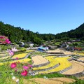 beautiful japan Ini Rice Terrace Aki Ota Town