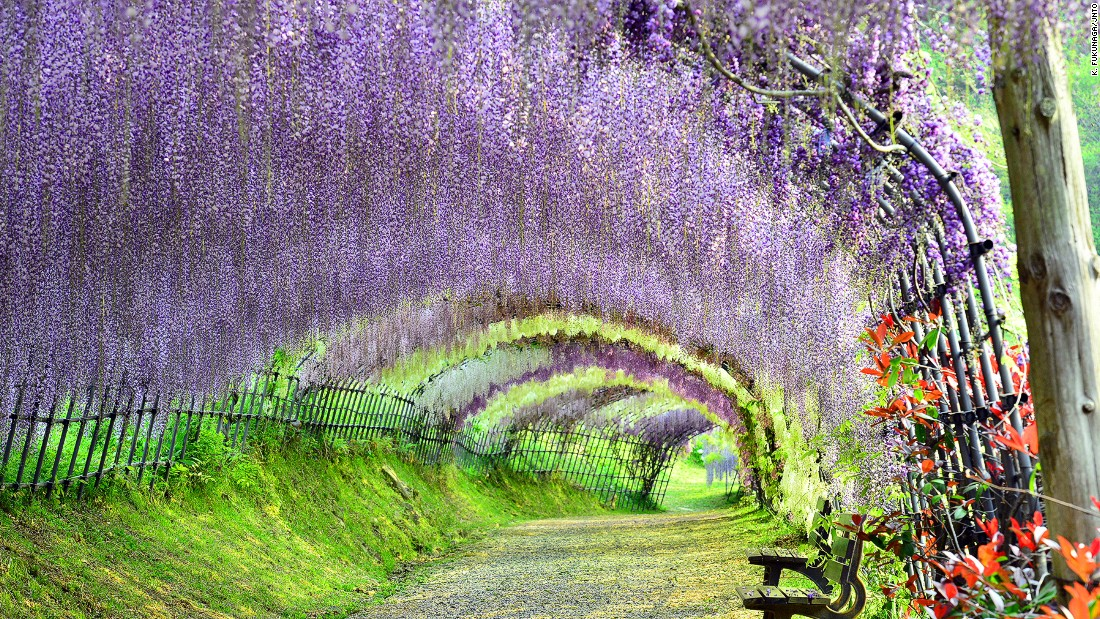 "More than 15 million tourists visited Japan in 2015, and 2016 is set to be another bumper year. With sights like <a href=""http://edition.cnn.com/2015/03/24/travel/gallery/most-beautiful-japan/"">Kawachi Fuji Garden </a>in Fukuoka, they're onto a good thing."