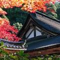 beautiful japan Saimyo-ji Temple Lake Biwa Shiga