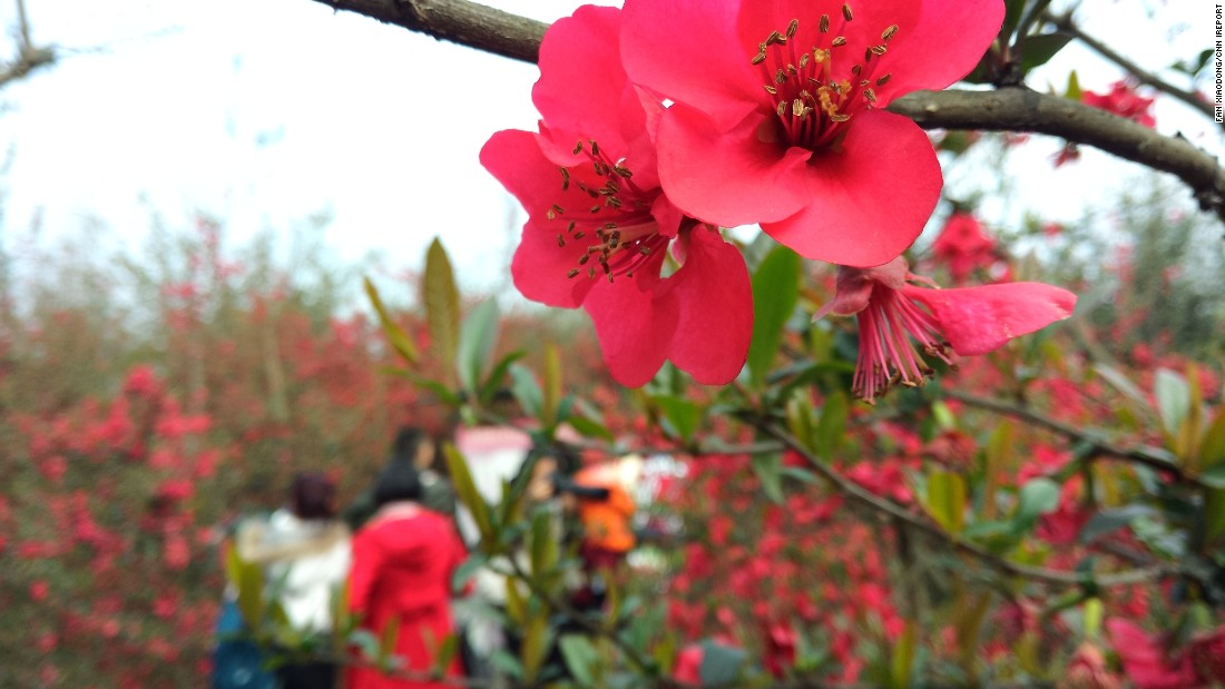 "Pink blossoms <a href=""http://ireport.cnn.com/docs/DOC-1224026"">welcome tourists</a> on an organic farm in China's southwestern Sichuan province on March 8."