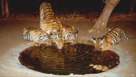 twl bill weir india tiger conservationist _00011321