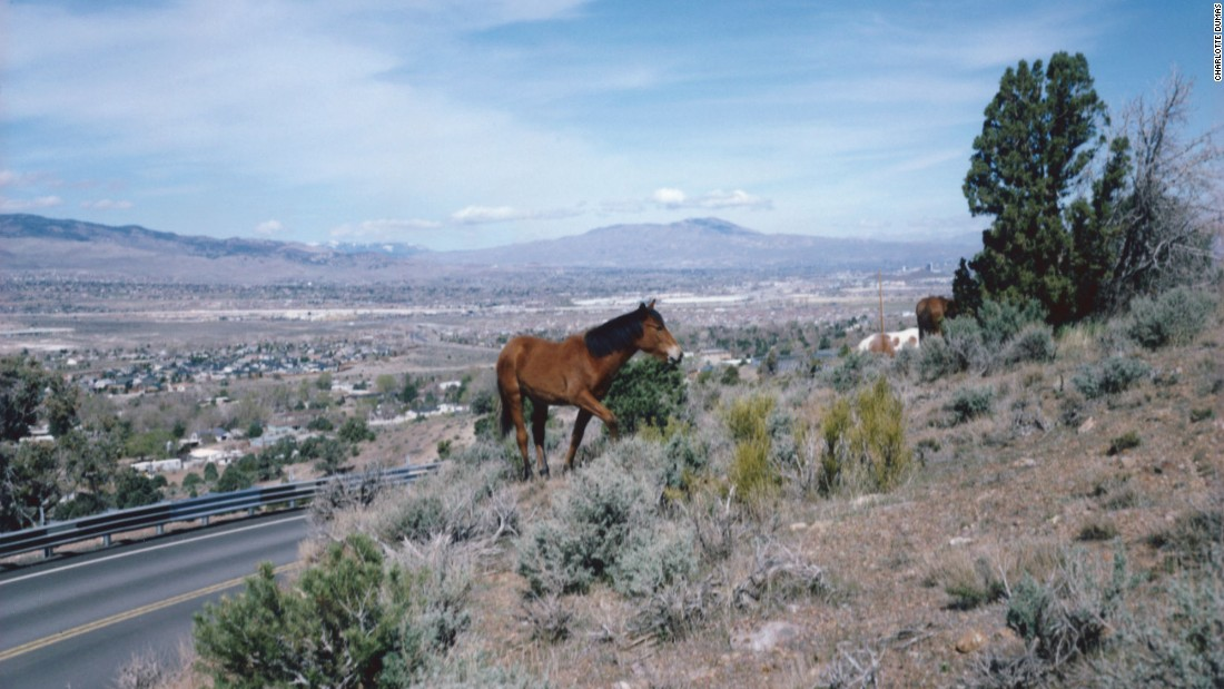 A wild mustang grazes near a highway in rural Nevada. The intersection between wild horses and residential communities can have dangerous health consequences, according to an equine veterinarian.
