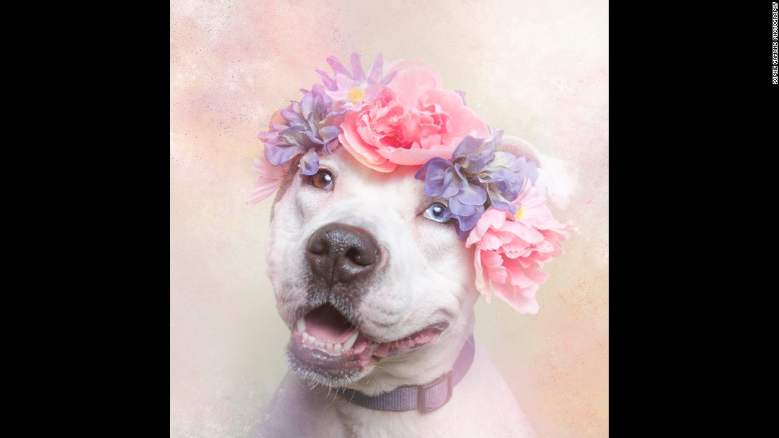 "Through pictures of Cali and her cohorts, Gamand hopes to change the way we look at pit bulls and ""renew the dialogue around these misunderstood dogs."""
