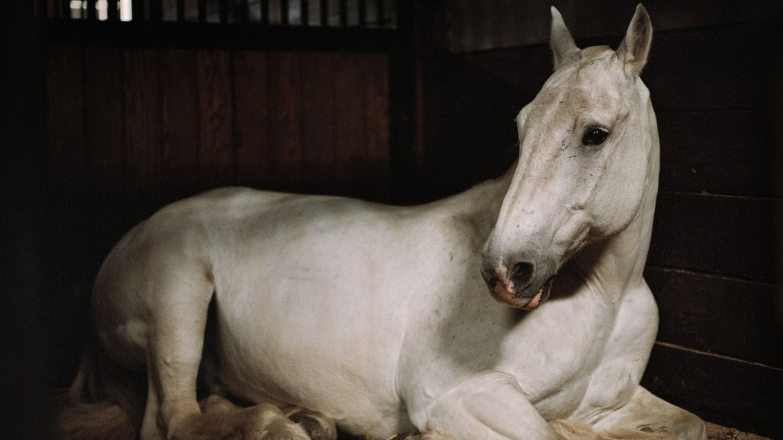"Ringo, a military horse used for funeral processions at Arlington National Cemetery, shown resting in his stable. Dumas spent 15 nights in the stable to capture the moments for her video work, ""Anima."""