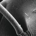 jonty hurwitz ant png