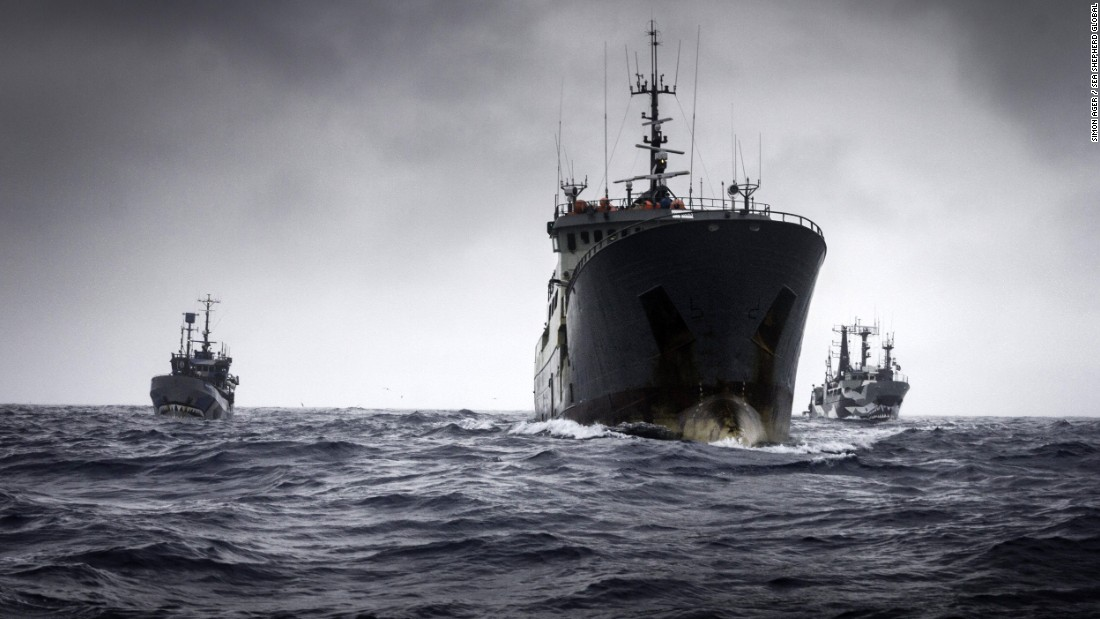 Sea Shepherd vessels the Bob Barker and the Sam Simon flank the alleged poaching vessel, the Thunder.