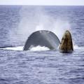 150406-SA-Thunder-Sinking-066A4888