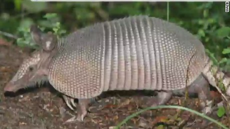pkg armadillo mother in law shooting accident_00001409