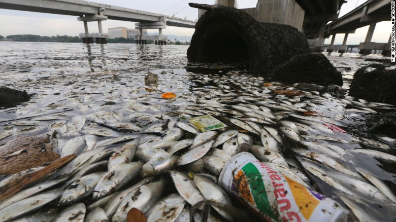 Dead fish litter Rio's Olympic rowing, canoeing courses