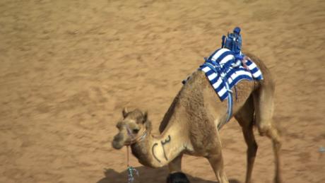 ctw pkg jensen uae camel racing_00011423