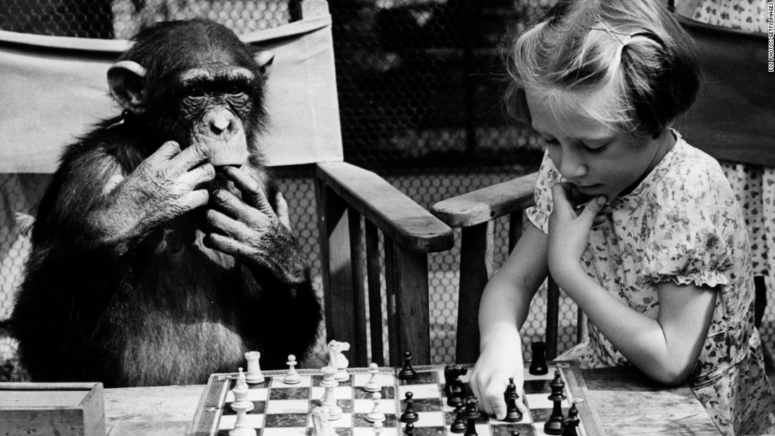 Strategy games like Chess will improve logical thinking and problem solving.