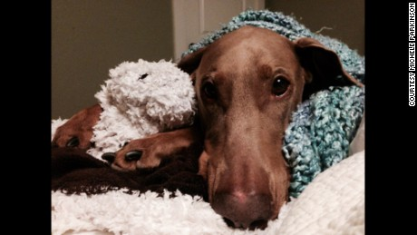 Mocha the Doberman is now doing well.