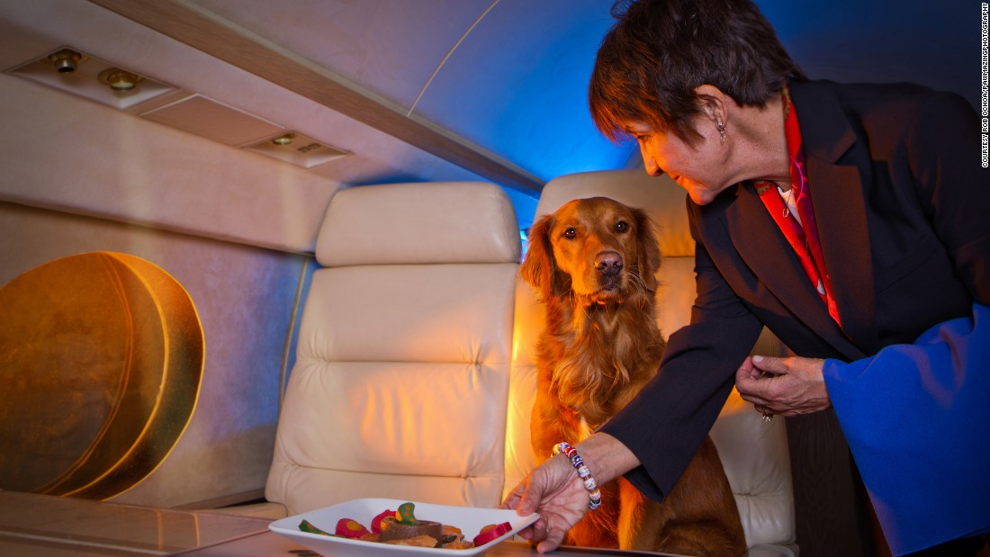 Veteran flight attendant Carol Martin rolls out the red carpet for her four-legged passengers. Many pets on private jets receive the same five-star treatments as their owners.