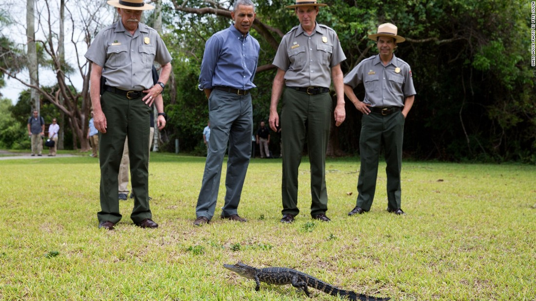 Keeping his distance from a baby alligator on Earth Day at Everglades National Park in Florida on April 22, 2015.