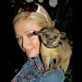 paris hilton kinkajou RESTRICTED