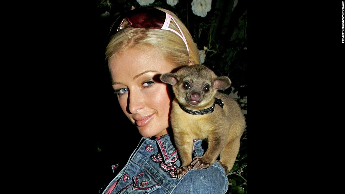 "Paris Hilton arrives home with her new friend, a mammal called a kinkajou, on November 14, 2005, in Hollywood, California. Named by Hilton as ""Baby Luv"",<a href=""http://www.washingtonpost.com/wp-dyn/content/article/2006/08/11/AR2006081101408.html"" target=""_blank""> the animal allegedly bit her, </a>causing her to visit a hospital emergency room to receive a tetanus shot."