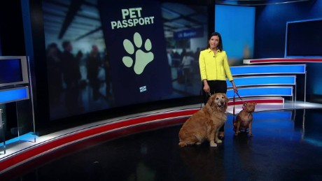 How to get a 'pet passport'