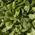 spinach FILE