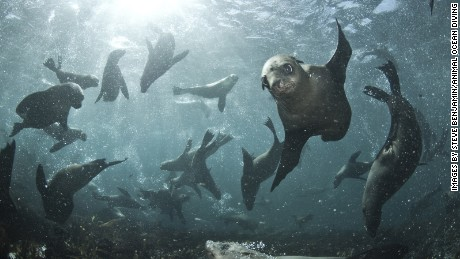 Seal Snorkeling in South Africa.