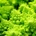 broccoflower STOCK