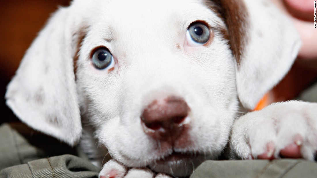 Petland Puppies Linked To Infection Outbreak In Several States — CDC