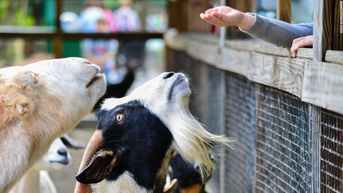 Petting zoos and county fairs have been associated with outbreaks of E. coli and flu.