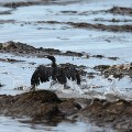 08 ca oil spill 0521