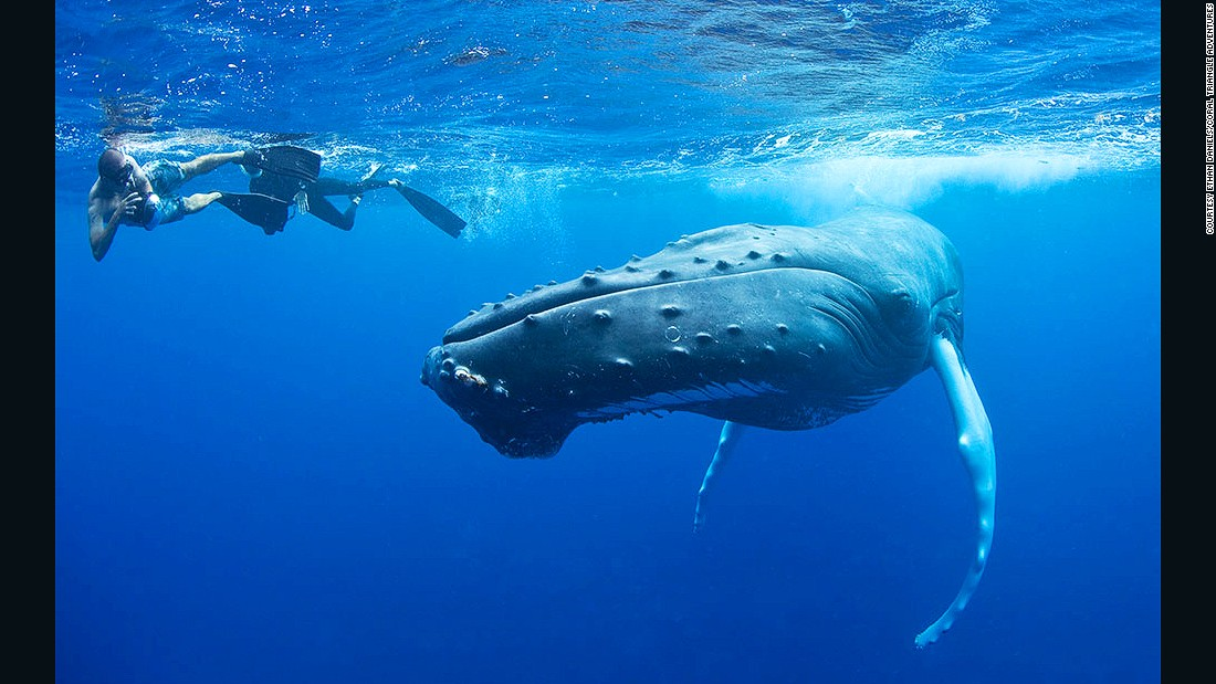 We asked marine experts to share their picks for some of the world's best places to snorkel. Silver Bank, a relatively shallow stretch of the Caribbean Sea, scored high. Off limits to large ships, it's a safe haven for North Atlantic humpback whales to mate and give birth.