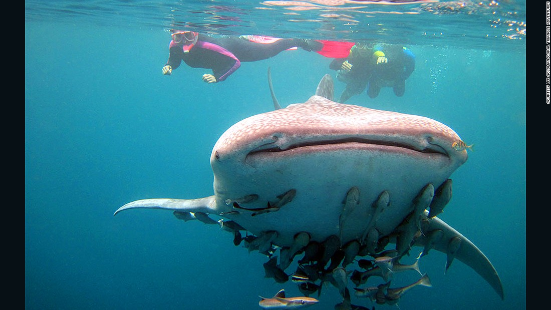 "In addition to offering diverse coral reefs, the Philippines is becoming increasingly popular as a top spot to<a href=""http://www.cnn.com/2015/07/05/travel/whale-shark-oslob/""> swim with whale sharks</a>."