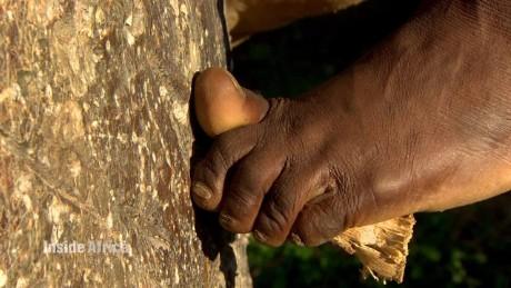 malawi farming fruit food baobab inside africa_00002925