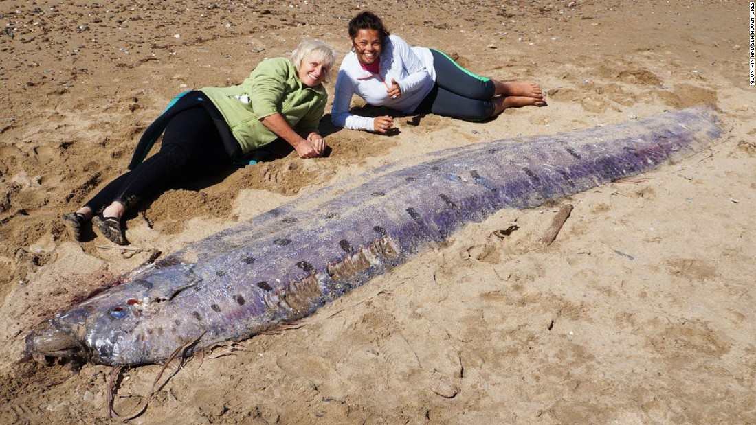 Prehistoric fish washed up on shore - photo#2