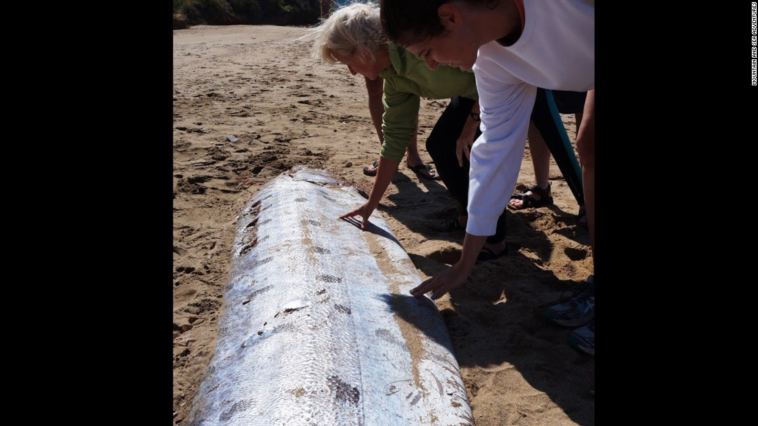 Rare 17-foot oarfish washes ashore on a Calif. island - CNN Oarfish 56 Ft