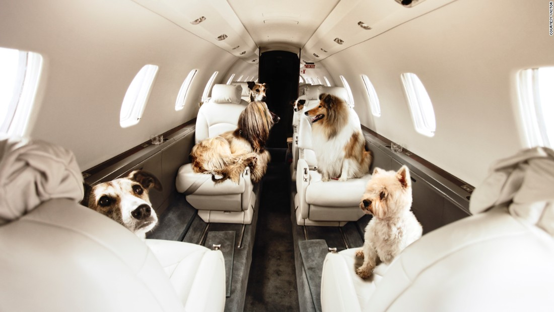 "Pets can come along for the ride on Victor's charter flights. Their ""Furs Class"" service aims to reduce the stress animals face in the hold."