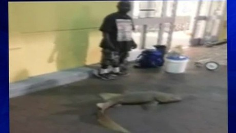 man selling live shark outside publix pkg_00000904