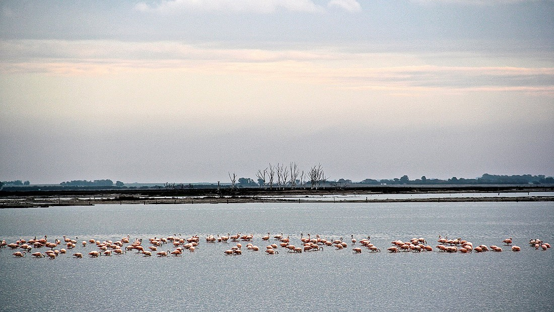 Color is hard to find in the bleached town, but pink flamingos add a touch of life to it. Permanent residents, the flamingos are usually found gathered about a kilometer away from the main city ruins.