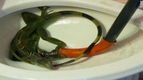 iguana clogs toilet pkg_00004906