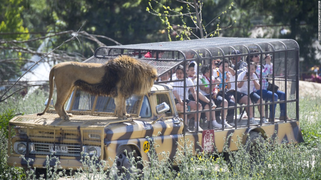 The safari park in Rancagua is a popular attraction and offers visitors a unique and extremely closeup experience with the wildlife.