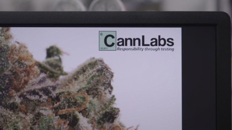 cannabis labs high profits_00001806