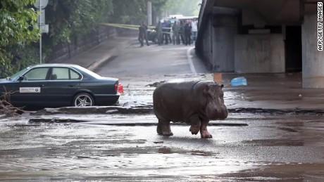 georgia floods stranded zoo animals ansarwi pkg_00002819.jpg