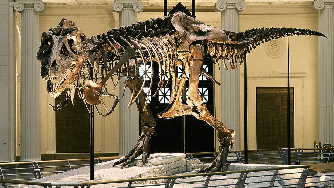 Scientists ID Dinosaur That Was Built Like A Tank