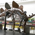 dino museums 2015-brussels