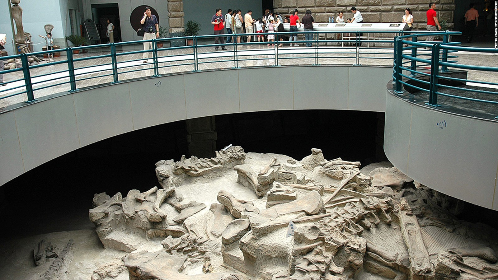 Of The Worlds Best Dinosaur Museums CNN Travel - Museums on us list