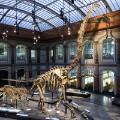 dino museums Museum fur Naturkunde Berlin