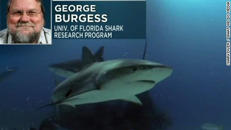 response to shark attacks george burgess sot ac_00010326.jpg